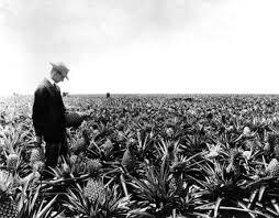 james drummond dole u201cthe pineapple king u201d u2014 jamaica plain