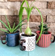 Cactus Planters by Make A Mug Into A Planter By Drilling Drainage Holes With A