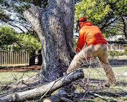qualities of a reliable tree removal company