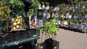 Transplant Fruit Trees - odessa ukraine 10th of june 2017 4k at the transplant selling