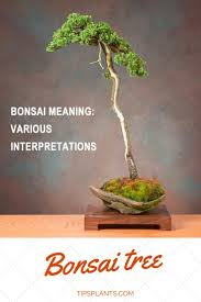 63 best bonsai tree images on bonsai trees bonsai