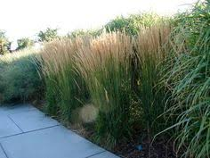 overdam new utah gardener the most drought tolerant waterwise