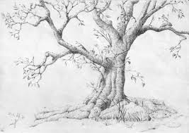 pencil drawing of trees gallery for gt pencil sketches of oak