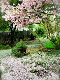 197 best california native gardens images on pinterest native