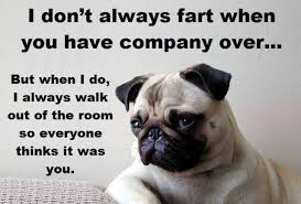 Funny Pug Memes - pug meme archives page 13 of 18 pug meme funny cute pugs