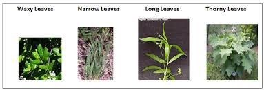 plant adaptations sas