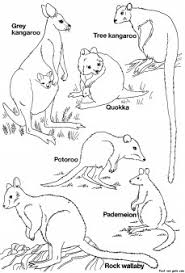 free printable australian animals coloring pages kids fast
