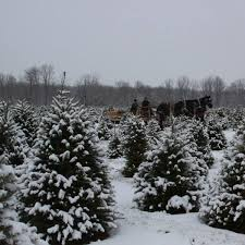 buy nearby for your christmas tree buy nearby mi