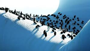 Of The South Teeming With Wildlife The Seas Of The South Sandwich Islands