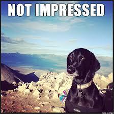 Not Impressed Meme - not impressed dog meme on imgur