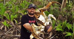 coconut crab latest news breaking headlines and top stories
