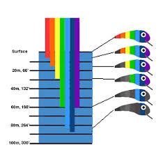 color selection lure color know what fish see what they don t and when it matters