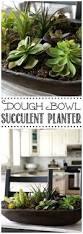3857 best succulent plant ideas images on pinterest succulent