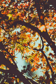 golden orange color free images nature outdoor branch sunlight fall flower