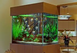 custom fish tank designs for freshwater aquariums modern