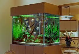 Fish Tank Reception Desk Amusing 90 Home Aquarium Ideas Design Decoration Of Best 25 Home