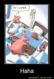 Funny Pig Memes - funny pigs 17 pics