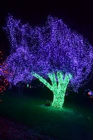 Zoo Lights In Houston by The Outlaw Gardener On The Ninth Day Of Christmas Zoo Lights The