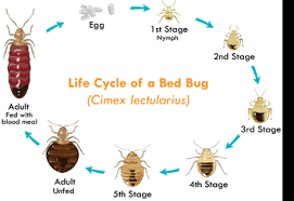 Bed Bug Bed Bug Pest Control Montgomery County Pa Bed Bug Control