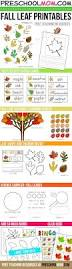 Leaf Dichotomous Key Worksheet 548 Best Learning Images On Pinterest Teaching Science Botany