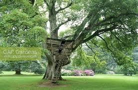 gap gardens wooden treehouse with ladder in ancient sycamore