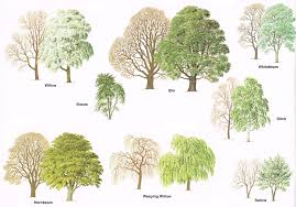different types of trees pin by lauren fitzpatrick on trees and bushes pinterest