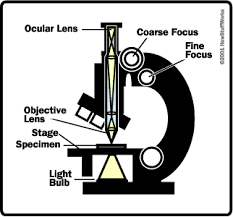 Parts Of A Compound Light Microscope The Basics How Light Microscopes Work Howstuffworks