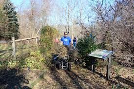 native wetland plants taking out the trash in eastern pa jacobsburg environmental