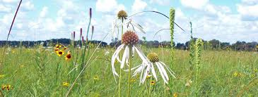 native illinois plants pollinative prairie and great seed bomb at the 2017 texas stem