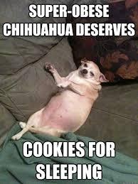 Memes De Chihuahua - funny chihuahua meme chihuahua best of the funny meme