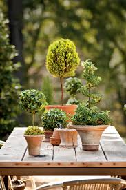 Lollipop Topiary Potted Topiary Trees For Winter Southern Living