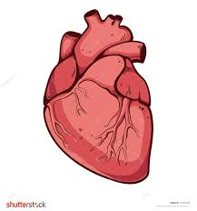 easy real heart drawings u203a copay online