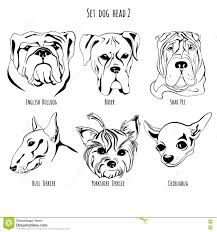 boxer dog yorkshire set dog head stock photo image 79850813