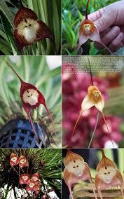 Monkey Orchids Monkey Orchids Album On Imgur