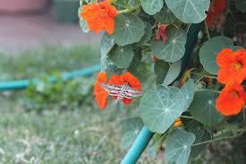 What Is Orange Flower Water - water wise pollinator gardens extension