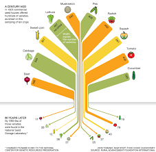 National Geographic Infographic Reveals What The Consumes We Really Lost 93 Of Food Varieties In 100 Years