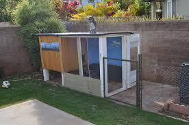 100 where to buy backyard chickens raising ducks or
