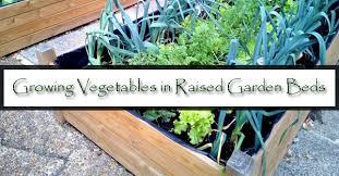 growing vegetables in raised garden beds mesa az