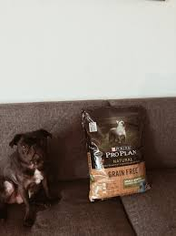 the benefits of switching your dog to a grain free diet the cult