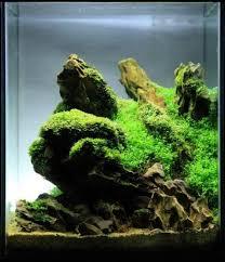 Aquarium Aquascaping Iadc A Few Great And Some Ordinary Nano Scapes Aquarium