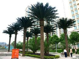 palm tree price palm tree price suppliers and manufacturers at