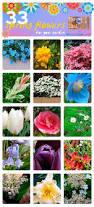 2556 best garden images on pinterest hummingbirds iowa and
