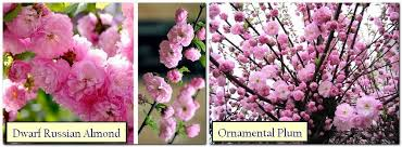 how to arrange a japanese garden selecting the correct plants