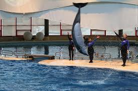 dolphin show national aquarium in baltimore md 1212274