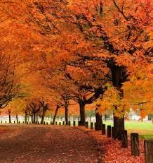 fall love fall u003e ottlite u003e ottlite blog helping