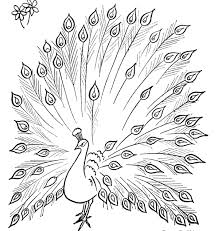 colours drawing wallpaper simple drawing of green peacock its kid