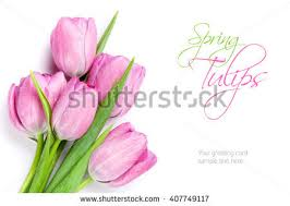 Images Of Tulip Flowers - bunch of tulips stock images royalty free images u0026 vectors