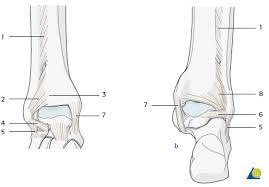 Posterior Inferior Tibiofibular Ligament Ao Surgery Reference