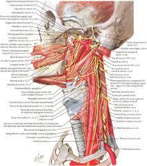Online Human Body Atlas Of Human Body