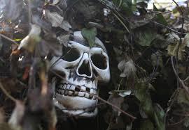 haunted hayride leads halloween fun news panama city news